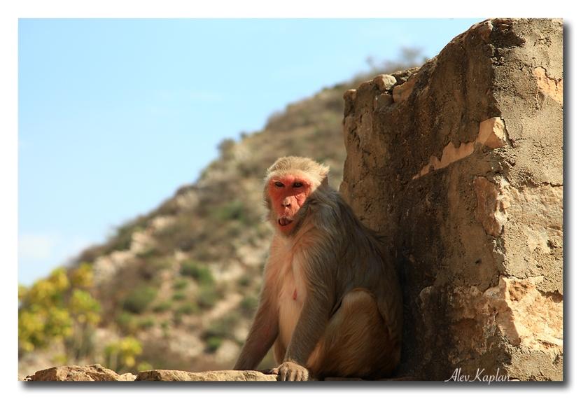 HİNDİSTAN – Jaipur Bölüm3